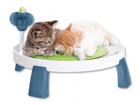 cat it comfort zone